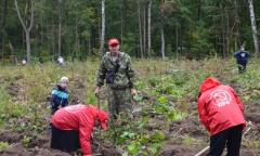 Коммунисты Зарайского района внесли лепту в восстановление леса (12.09.2015)