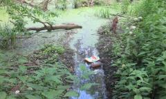 На чистую воду (19.06.2016)