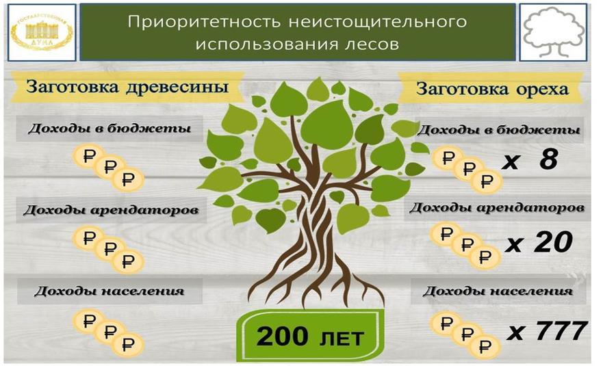 Лесной кадастр проблемы и пути решения