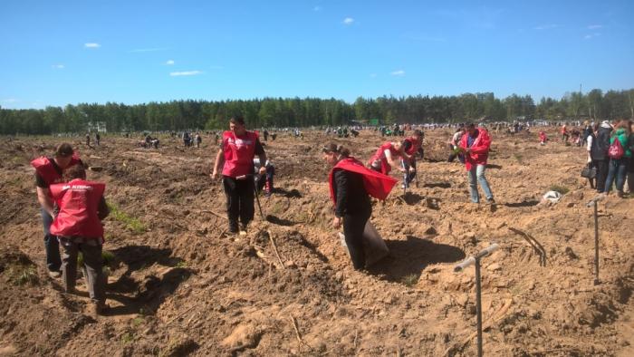 «Лес Победы» в городе Раменское