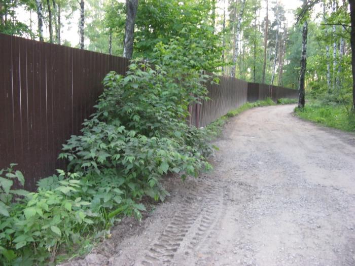 Люберецкой власти лес не нужен?!