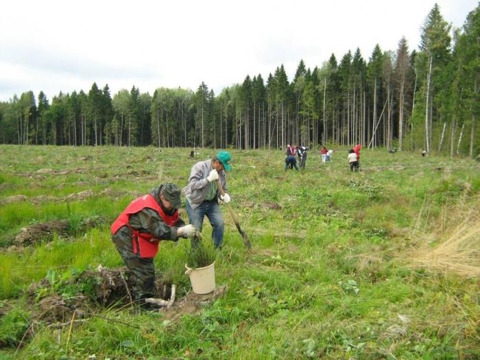 Ежегодная подмосковная акция «Наш лес. Посади свое дерево» в Можайском районе