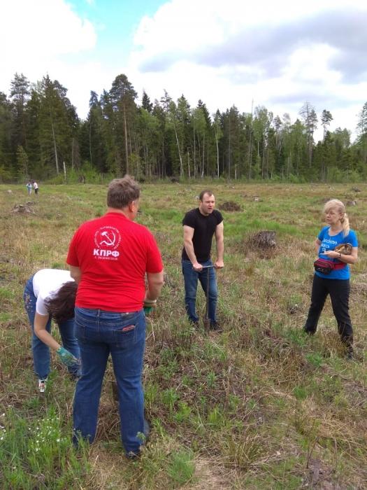 Раменские коммунисты показали, как правильно сажать «Лес Победы»
