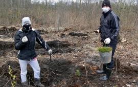 «Русскому лесу» быть!