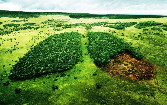Главное - воспользоваться ситуацией, а там… лес не расти!