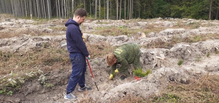 Мы сажаем лес Победы!